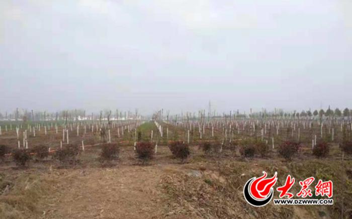 巨野县全面掀起秋冬植树热潮