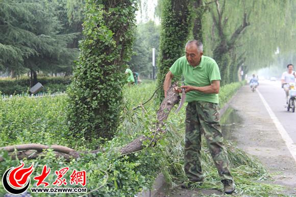 菏泽数百棵树木被连根拔起