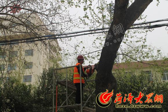 """菏泽/技术人员为树木""""做手术"""",除去树瘤"""
