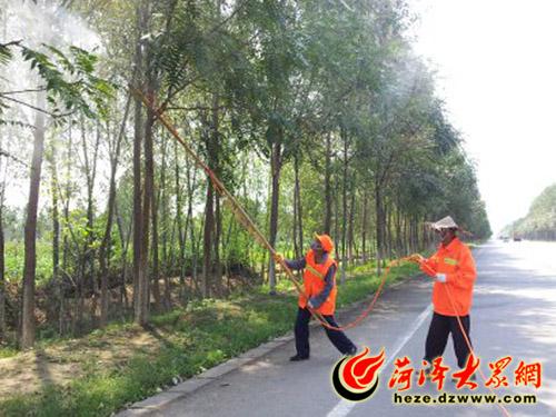 牡丹区公路局养护公司的工作人员正在向树木喷药
