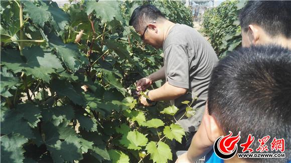 郓城县曹西村第二届葡萄采摘节隆重开幕