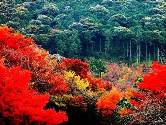 九寨沟   秋色醉人,九寨沟为最。秋天是九寨沟最灿烂的季节,五彩斑斓的红叶、彩林倒映在明丽的湖水中,彩色的秋叶与蓝色的湖水交相辉映,美如童话世界。  九寨沟   每到秋天,九寨沟便成了彩色的海洋,踏入山门,仿佛走进一个庞大的色彩王国。谷底到山巅,3000米高差,五大植被分布带,千叶万树,色彩纷呈,一树引领,满沟呼应,700平方公里山林都跃动起来。清晨的阳光里,芦苇海抖动一池金黄,仿佛在讲述一个古老的故事。镜海如镜,赶上色彩旺季,正是扮靓好时机。  九寨沟   五花海是九寨沟的骄傲,原本就富有的色彩,有